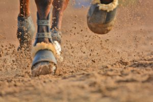 horse running, running horse, horse legs, free indian stock photos, free indian photos, indian photos, indian stock pictures, india photos, india pictures, india images, indian images, indian photography, free indian photos, free indian pictures, free photos, indian stock photography, free stock photography india, india stock photography, indian images