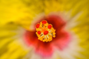 yellow color flower closeup, flower closeup, flowers, indian flowers, flower,reptile, lizard closeup, nehru zoological park, free indian stock photos, free indian photos, indian photos, indian stock pictures, india photos, india pictures, india images, indian images, indian photography, free indian photos, free indian pictures, free photos, indian stock photography, free stock photography india, india stock photography, indian images