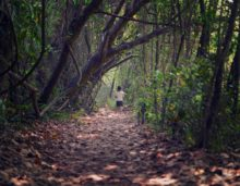 deep forest in kerala, kerala forest, indian forests,free indian stock photos, free indian photos, indian photos, indian stock pictures, india photos, india pictures, india images, indian images, indian photography, free indian photos, free indian pictures, free photos, indian stock photography, free stock photography india, india stock photography, indian images