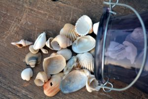 shells on wooden table, shells, beach items, wooden table, wood, glass, free indian stock photos, free indian photos, indian photos, indian stock pictures, india photos, india pictures, india images, indian images, indian photography, free indian photos, free indian pictures, free photos, indian stock photography, free stock photography india, india stock photography, indian images