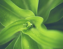 green indoor plant, free indian travel and stock photos