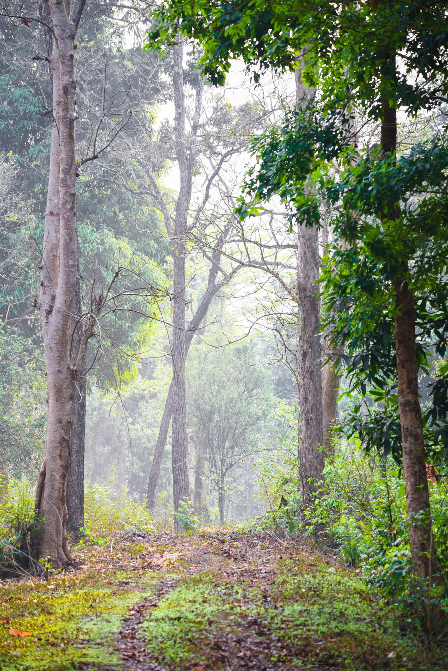maredumilli forest, free indian travel and stock photos