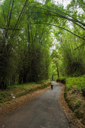 wayanad bamboo forest, free indian travel and stock photos