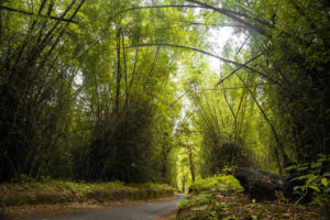 bamboo forests, wayanand, free indian travel and stock photos