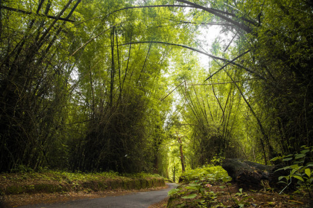 bamboo forests, wayanand, free indian stock photos