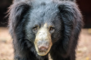 bear at zoo park, hyderabad, free indian travel and stock photos