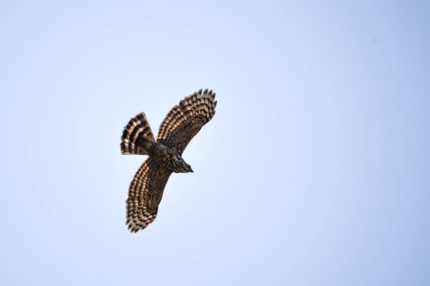 bird in flight, download high quality indian stock photos