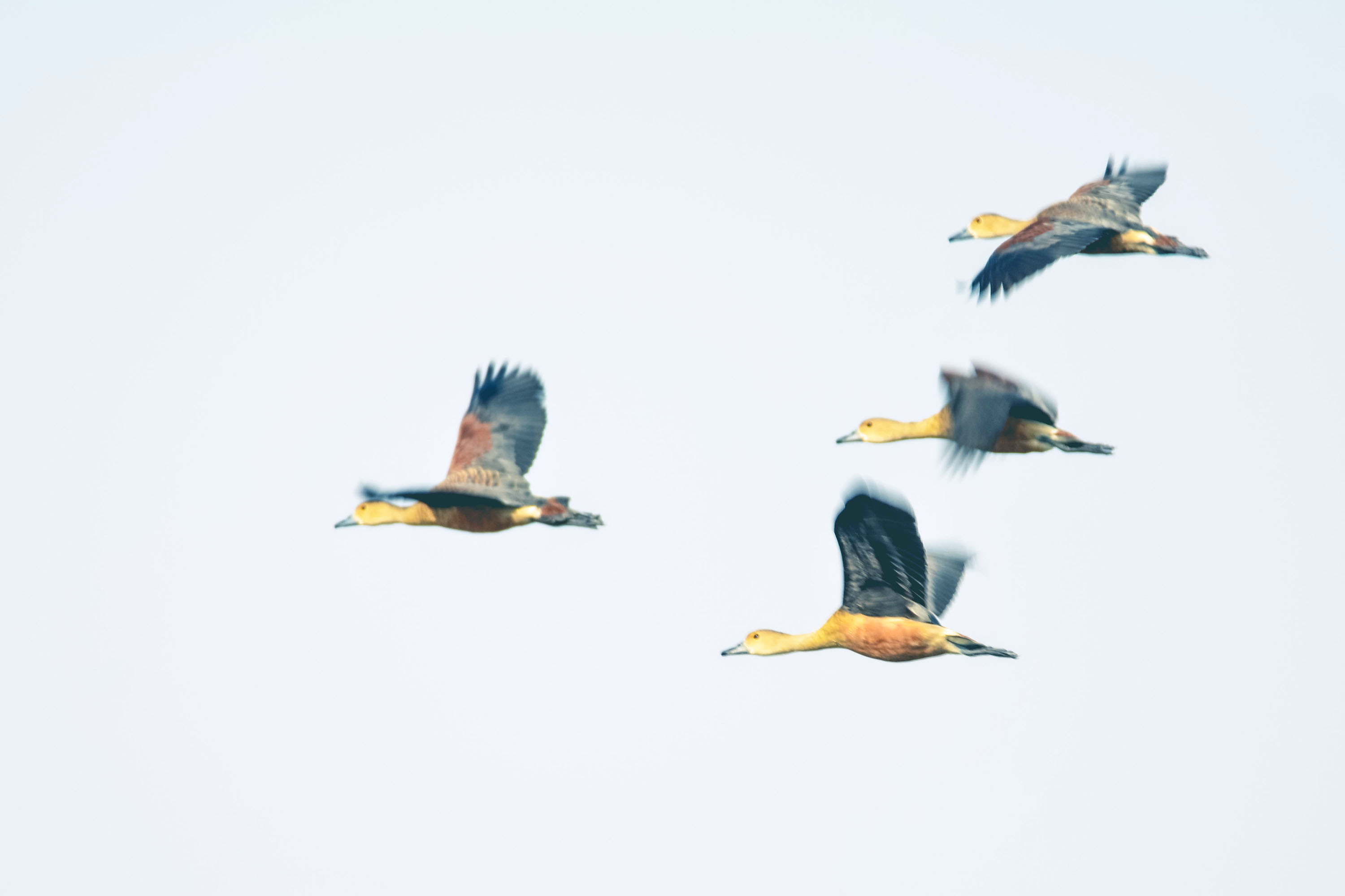 flying birds, free indian travel and stock photos