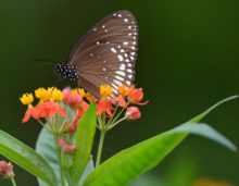 butterfly on flower, indian travel and stock photos
