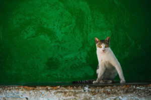 Sitting cat, cat, free photos, free indian photos, free indian stock photos, india travel photos, indian images, free indian photos, free indian pictures, indian stock photography, indian travel images