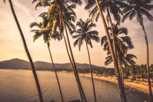 coconut trees at palolem beach goa, free indian travel and stock photos