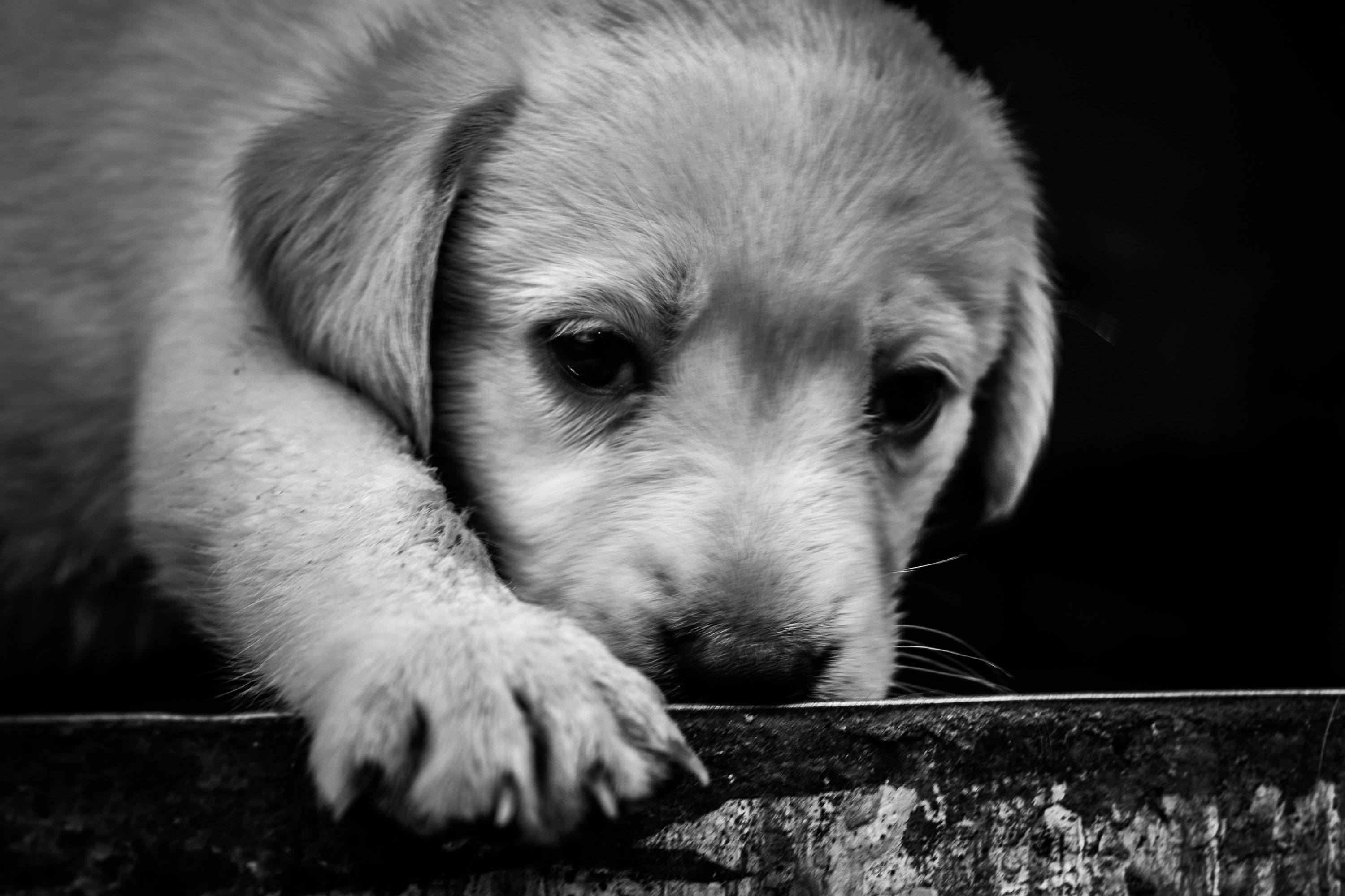 cute indian puppy, free indian travel and stock photos