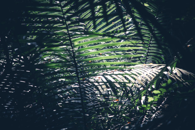 green, leaves, forest, free indian stock photos