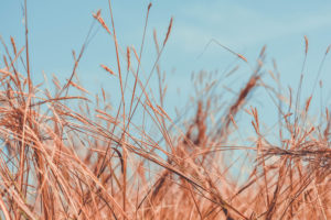 Wild Dry Grass, download free indian travel and stock photos