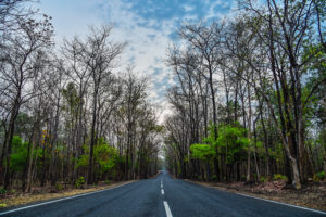 Highway to maredumilli forest , free photos, free indian photos, free indian stock photos, india travel photos, indian images, free indian photos, free indian pictures, indian stock photography, indian travel images
