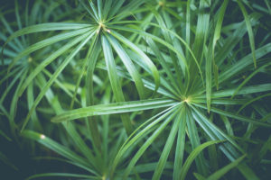 Wild grass, green, free photos, free indian photos, free indian stock photos, india travel photos,